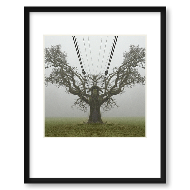 Quot The Tree King Quot Framed Print