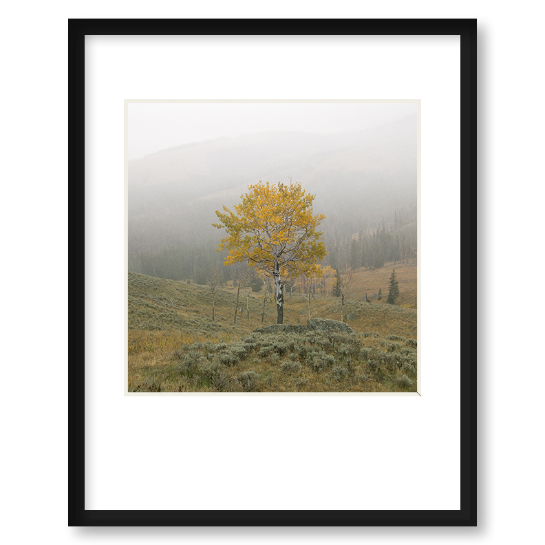 Quot The Reslient One Quot Framed Print