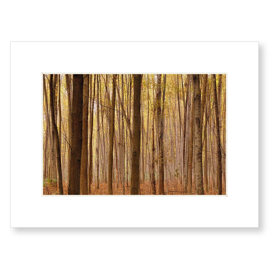 Quot Lost In The Woods Quot Matted Print