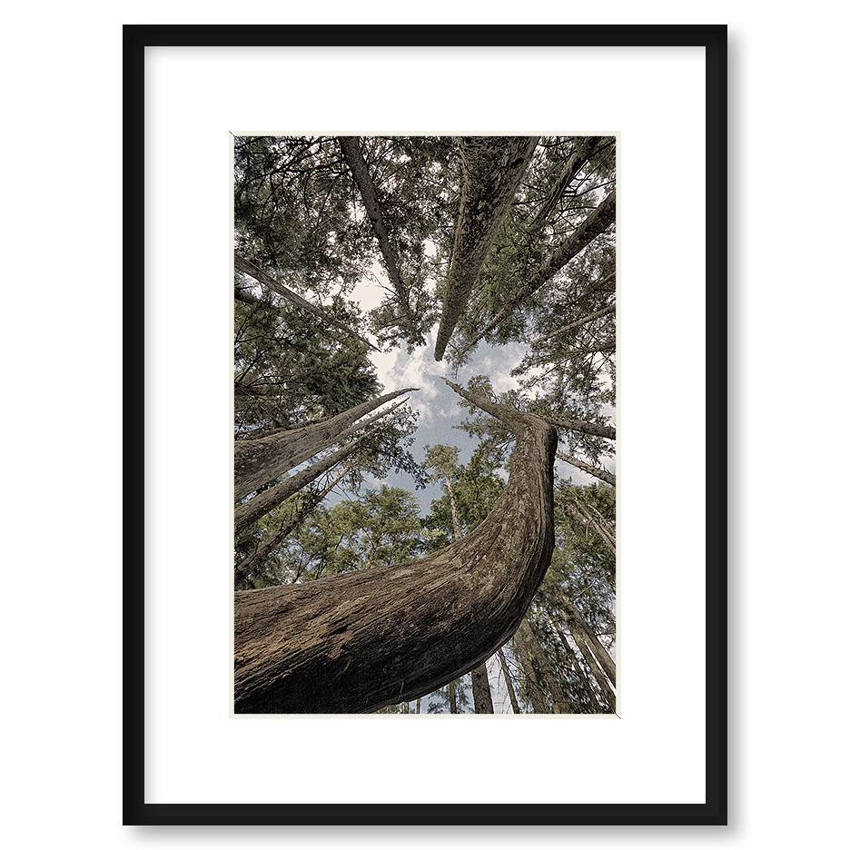 Quot To The Sky Quot Framed Print