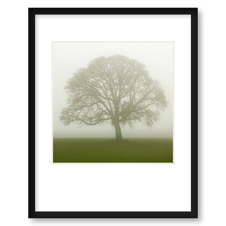 Quot The Solitary One Quot Framed Print