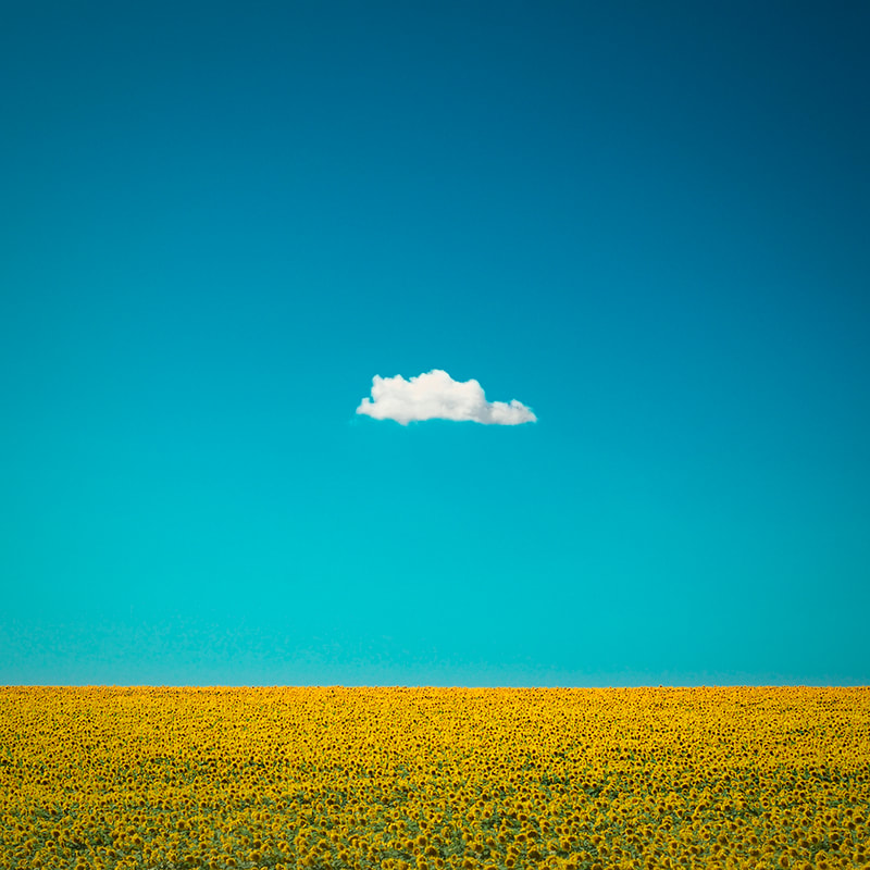 One lone cloud over sunflower field. Fine art photo print. Modern minimalist photography.